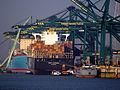 MSC Luciana - IMO 9398383, Evelyn Maersk - IMO 9321512, Tripoli - IMO 6105023 in Deurganckdok, Port of Antwerp.JPG