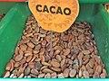 Malvales - Theobroma cacao - 6.jpg
