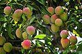 Mango village.jpg