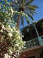Marrakesh, Majorelle Garden (5364680081).jpg