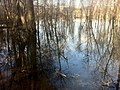 Marsh, Big Creek Greenway - panoramio.jpg