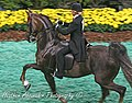 """Mary Gaylord and """"According to lynn"""" in the FIve Gaited stake at the 2009 Worlds championship Horse Show (3877971861).jpg"""