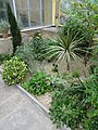Mediterranean - US Botanic Gardens 30.jpg