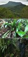 Melanophryniscus milanoi habitat.png