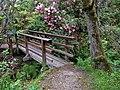 Mendocino Coast Botanical Gardens.jpg