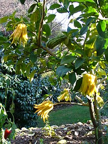 bouddha jardin