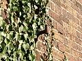 Metal Bracket on old railway bridge - geograph.org.uk - 679329.jpg