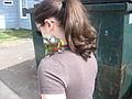Meyer's Parrot (Poicephalus meyeri) -pet in parrot harness.jpg