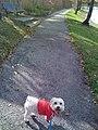 Mi perrito querido - panoramio.jpg