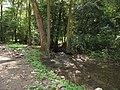 Milešovský potok, v lese pod Oparnem (002).JPG
