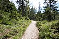 Mittenwald - trail 2.jpg