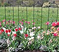 Mixed spring flowers in the flower bed - panoramio.jpg