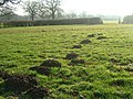 Moles Away - geograph.org.uk - 300014.jpg