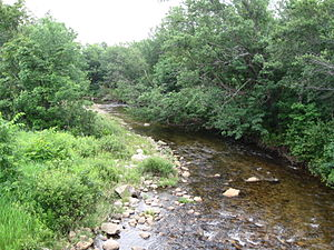 Moose River (New Hampshire) - The Moose River in Randolph, New Hampshire