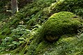 Moss-covered boulder in Gullmarsskogen ravine.jpg
