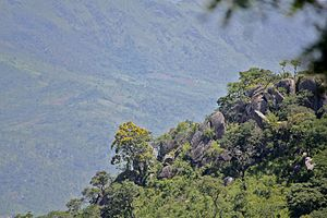 Bvumba Mountains - Slopes of Mount Vumba in Mozambique