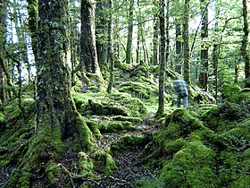 Mount of moss-te anau.jpg