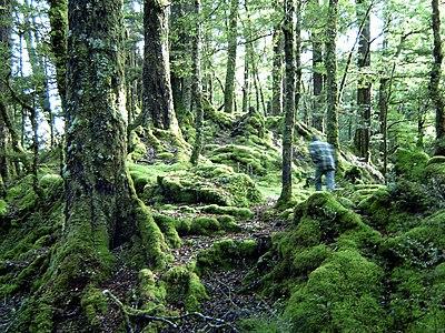 Verwonderlijk Tropisch regenwoud - Wikikids BW-83