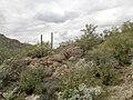 Mt. Pinter Base Loop, Tonto National Forest, Butcher Jones Trail, Fort McDowell, AZ 85264, USA - panoramio (100).jpg