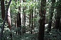 Muir Woods National Monument 2010 16.JPG