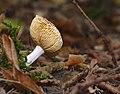 Mushroom (36315255974).jpg