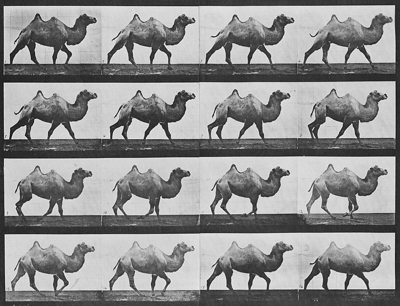 eadweard muybridge - image 8