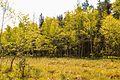 NPR Radostínské rašeliniště 20.jpg