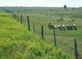 NRCSWY70001 - Wyoming (6925)(NRCS Photo Gallery).tif
