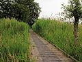 Nationaal Park Weerribben-Wieden. Vlonderpad door veenmoeras 02.JPG