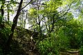 Nationalpark Müritz - am Weg zur Holzbrücke Pagelsee (4).jpg