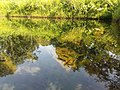Natural mirror by nature.jpg