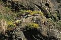 Natural monument Calvary in Motol in spring 2012 (4).JPG