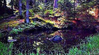 Bijambare Nature Park - Bijambare forest