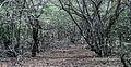 Nature Xerofila in Margarita Island.jpg