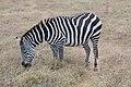Nature of Ngorongoro Conservation Area (23).jpg