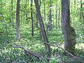 Nature reserve Dabrowa Radziejowska02.jpg
