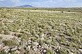 Near Deadman Canyon - Flickr - aspidoscelis.jpg