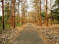 Nedumkayam Reserve Forest, Nilambur - panoramio (7).jpg