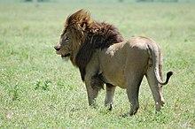 Ngorongoro Crater, Tanzania (2288742082).jpg