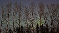 Northern Lights. Taken in St. Andrews, Manitoba (500456) (14023836182).jpg