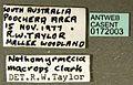 Nothomyrmecia macrops casent0172003 label 1.jpg