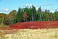Nova Scotia DSC 9881 - Blueberry Fields (4287976392).jpg