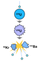 Nuclear fission of uranium.png