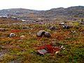 Nunavut tundra -c.jpg