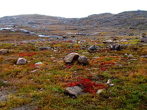 Geography of Canada - Arctic tundra covers parts of extreme northern Canada.
