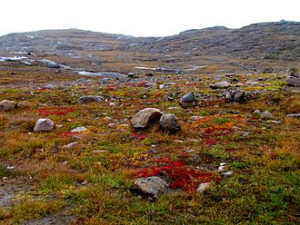 Northern Canada - A typical tundra landscape in Nunavut.