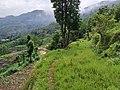 Nuwakote jungle nepal.jpg