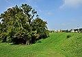 Oak at Hersberg, Luxemb 02.jpg