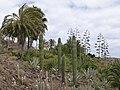 Oasis Park botanical garden - Fuerteventura - 01.jpg