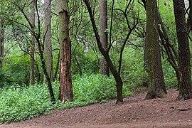 Ocotal forest 202006p4.jpg